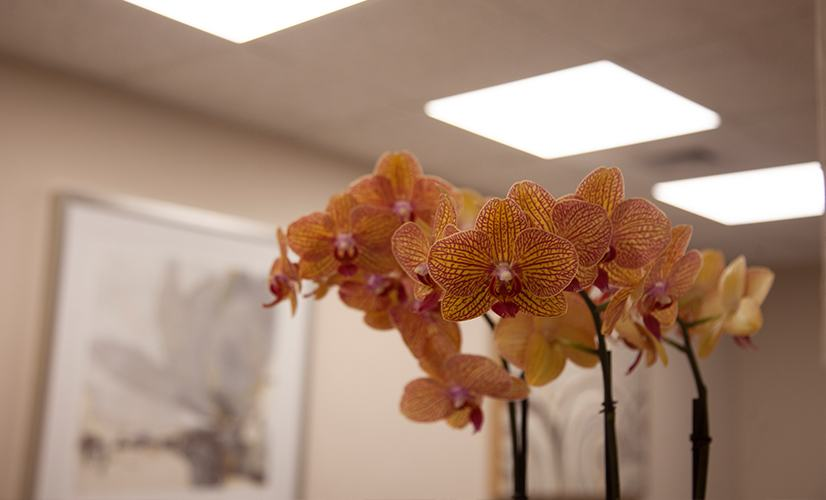 Orchids on dental reception desk